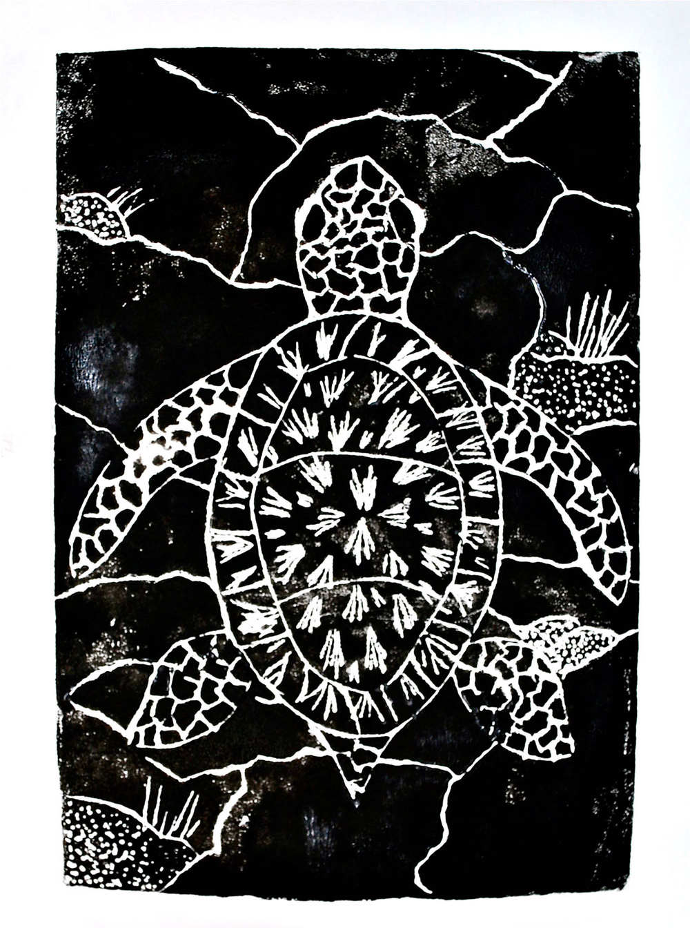 turtle_corrected.jpg