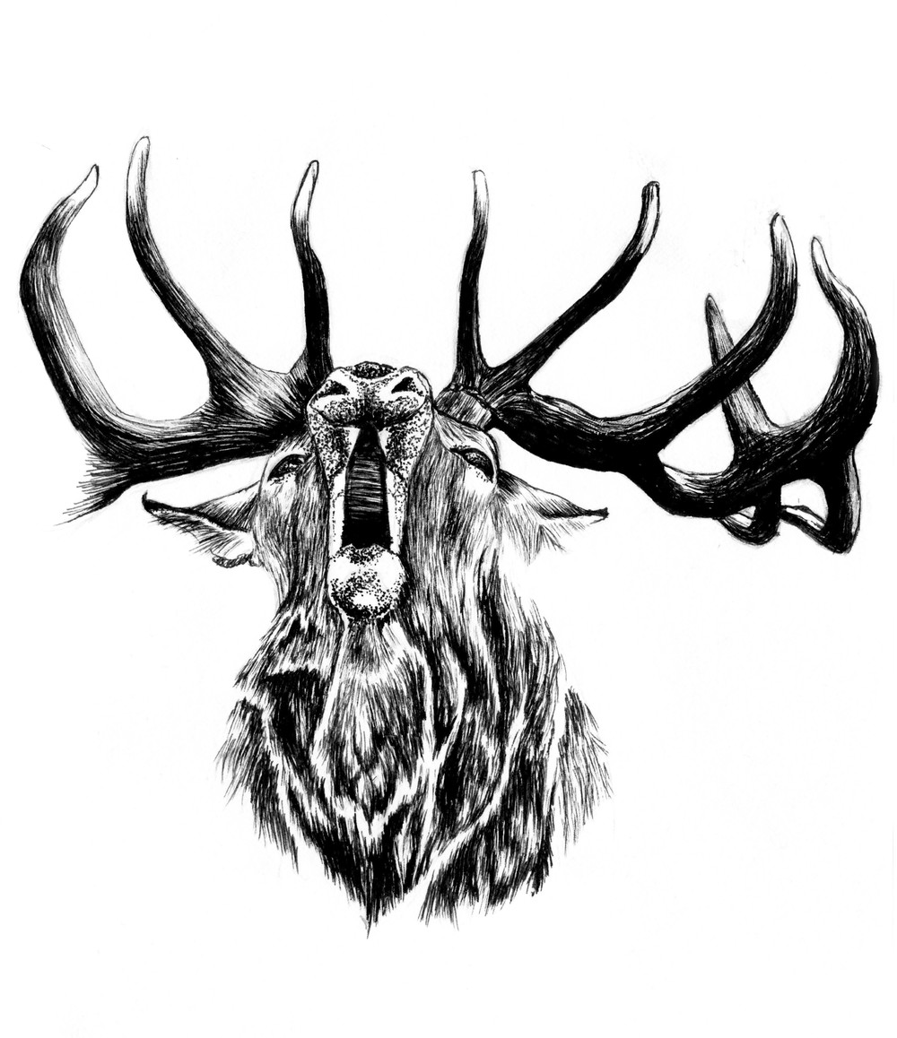 09_09_SEP_STAG_ROAR_WEB.jpg
