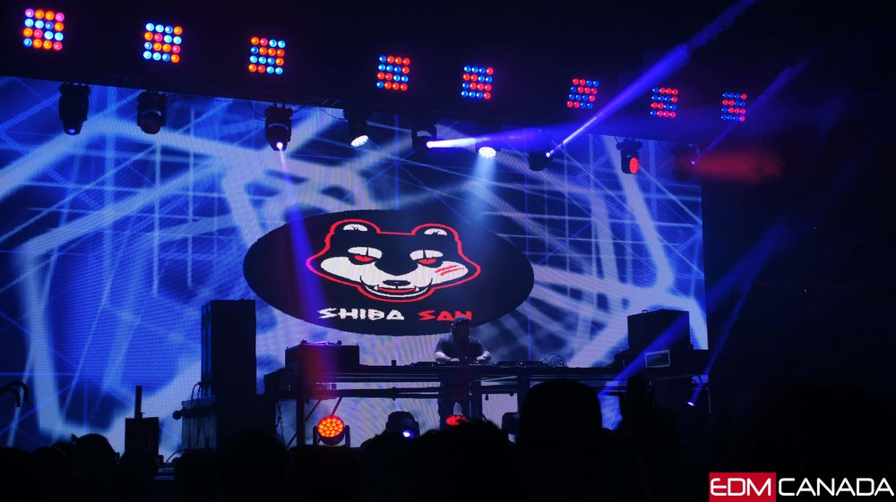 Shiba San - click to zoom