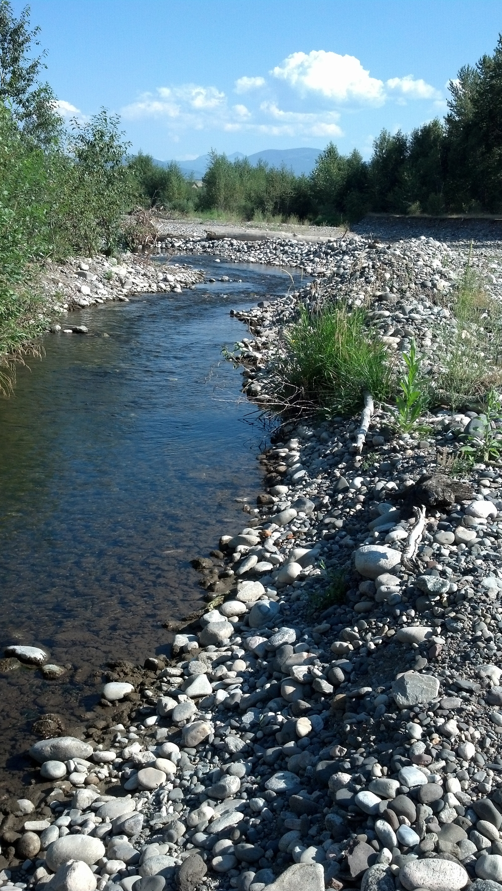 West Gallatin River, Bozeman, MT