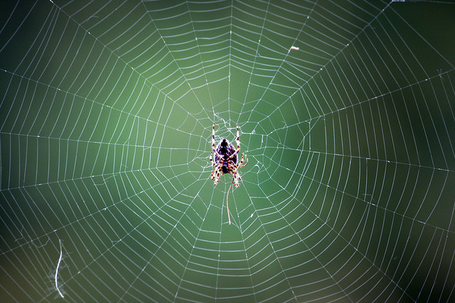 Buehler's research, such as that modeled after spider silk, combines biology and materials in order to create greater strength and durability.
