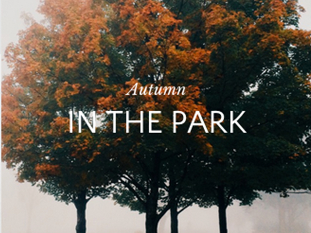 autumn int he park.jpg