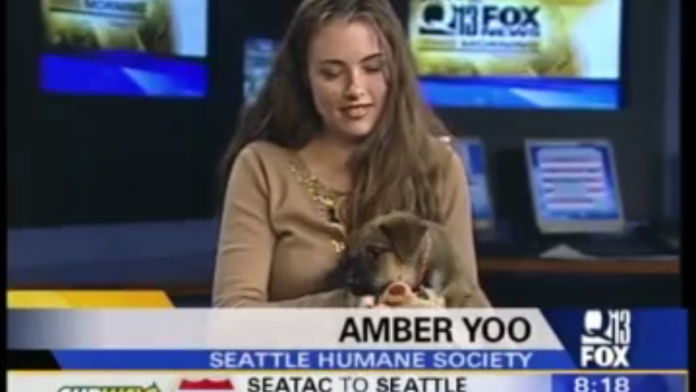 As the Marketing Communications Manager for Seattle Humane, Amber had a weekly spot on Q13 FOX News discussing adoptable pets and pet tips.