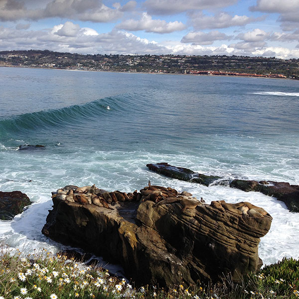 A view of the ocean in San Diego, California.