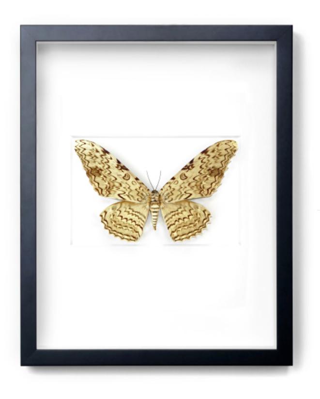 "Ghost Moth   16×20""h   PESL21"