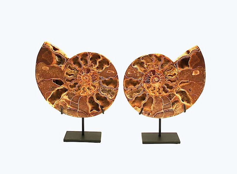 Cut/Polished Ammonite on Iron Stand