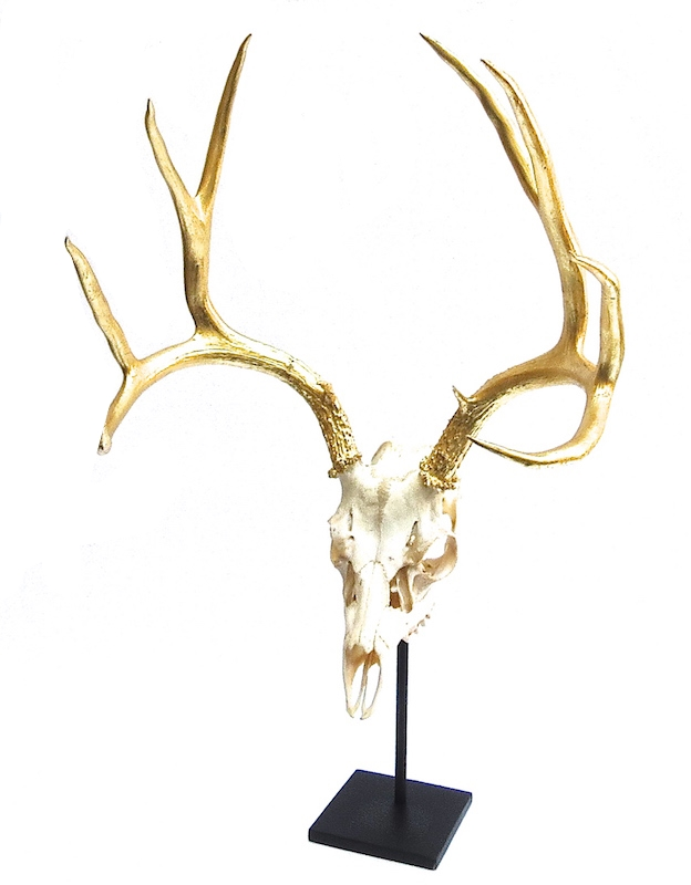 Deer Skull with Gilded Horns on Iron Stand