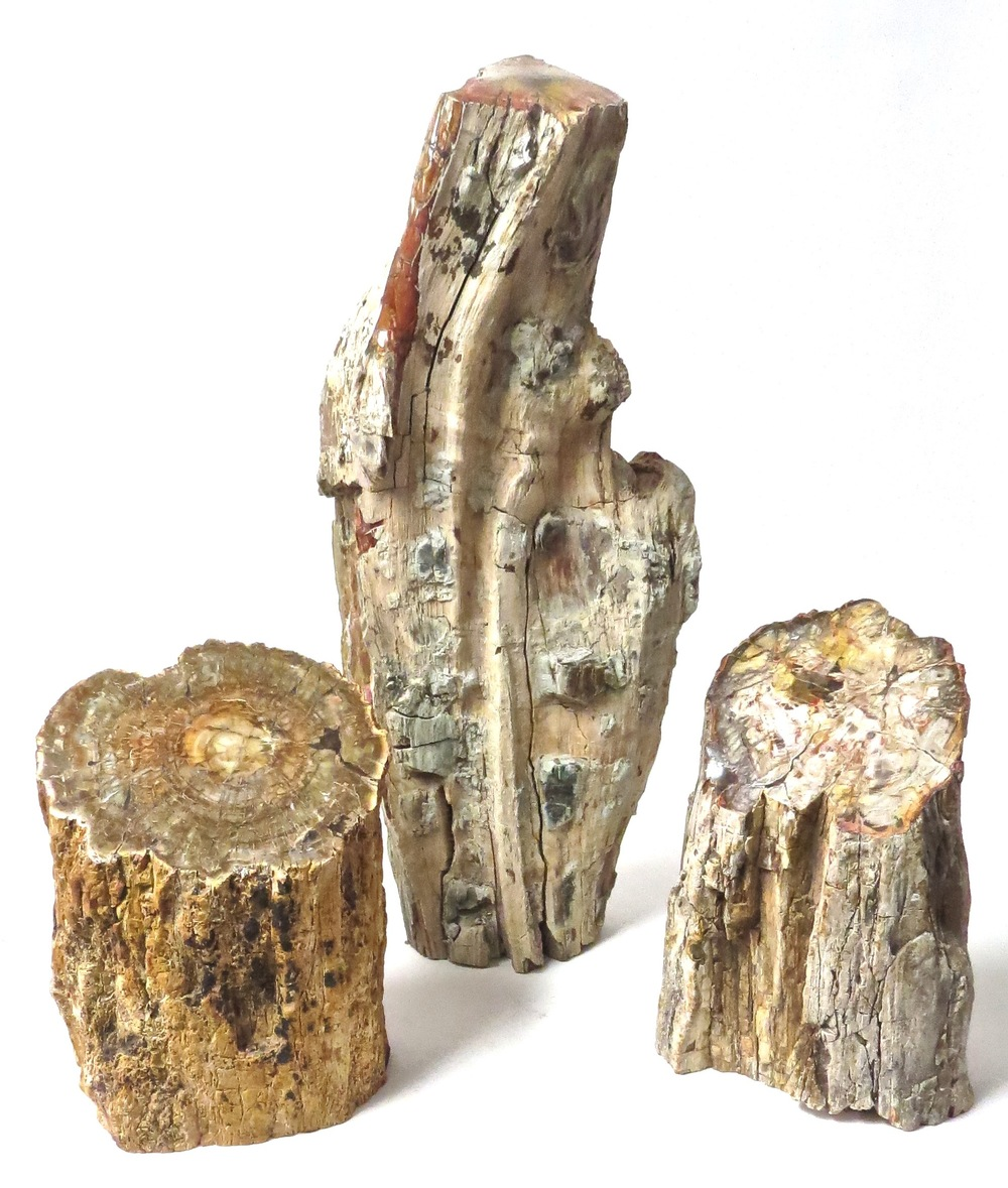 Petrified Wood Limb  MT331  7dx9-10h  MT330   9x6x21h  MT329  6x10h