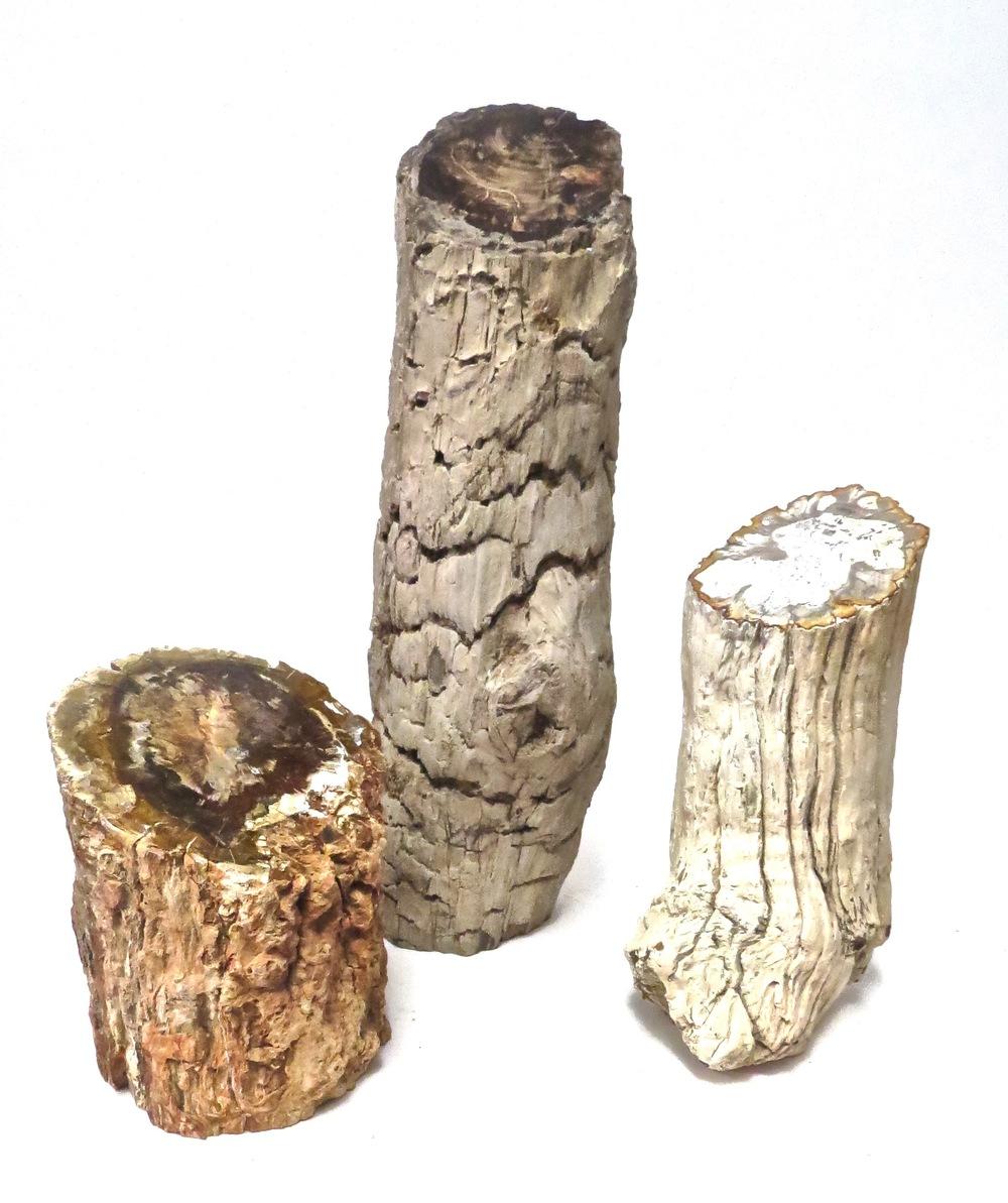 Petrified Wood Limb  MT331  7dx9-10h  MT333  6x19.5h  MT332  7x13h