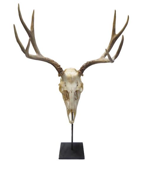 Deer Skull/Iron Stand  21x12x29h  PU007BB