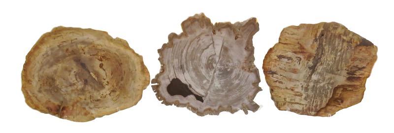 "Petrified Wood Slice  13""-15""d  VO570"