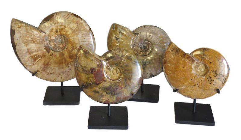 Polished Tan Ammonite Fossil/Iron Stand   7x4x10h  MT426AA  9x4x10.5h  MT427AA