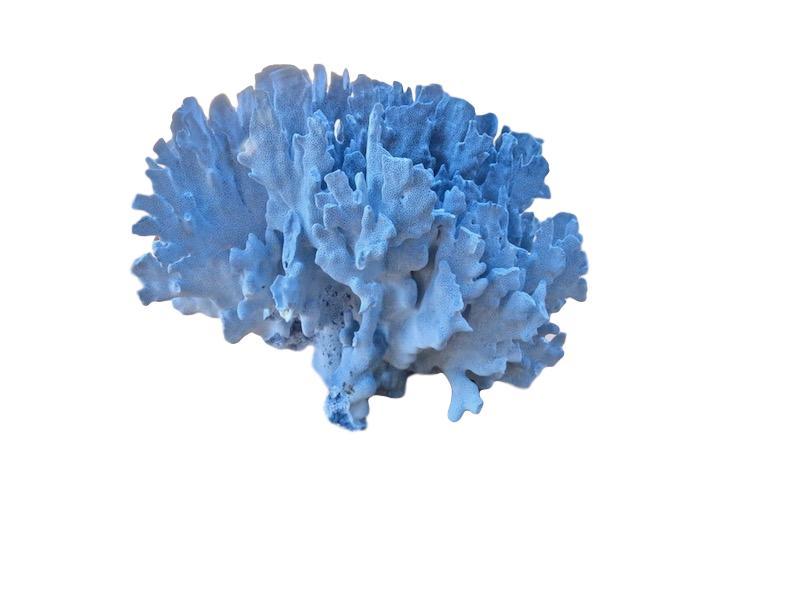 "Blue Coral 22""  T941"