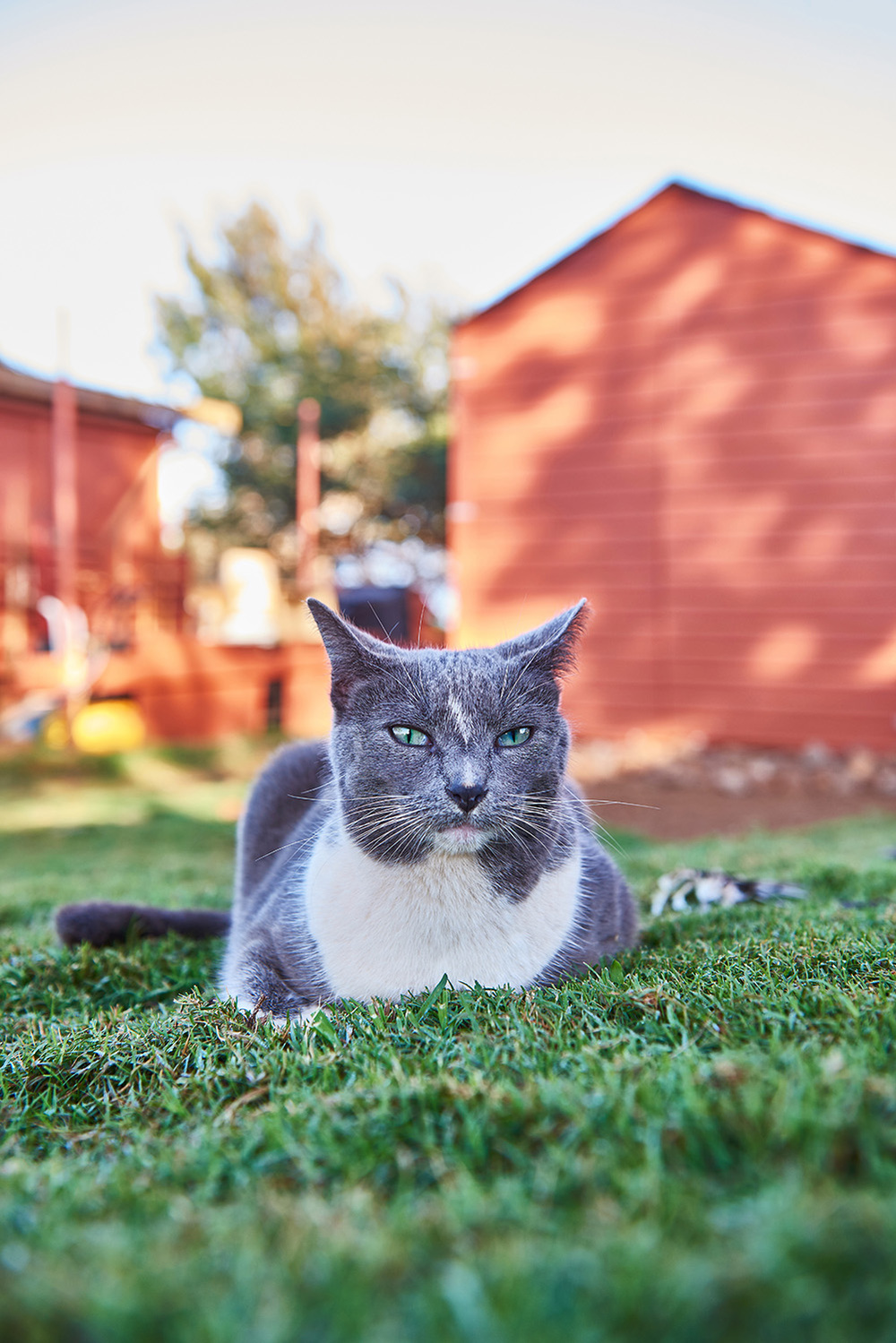 Lanai Cat-SC-090 sm.jpg