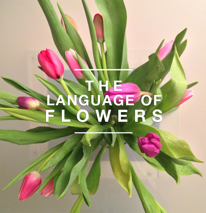 flower-hm