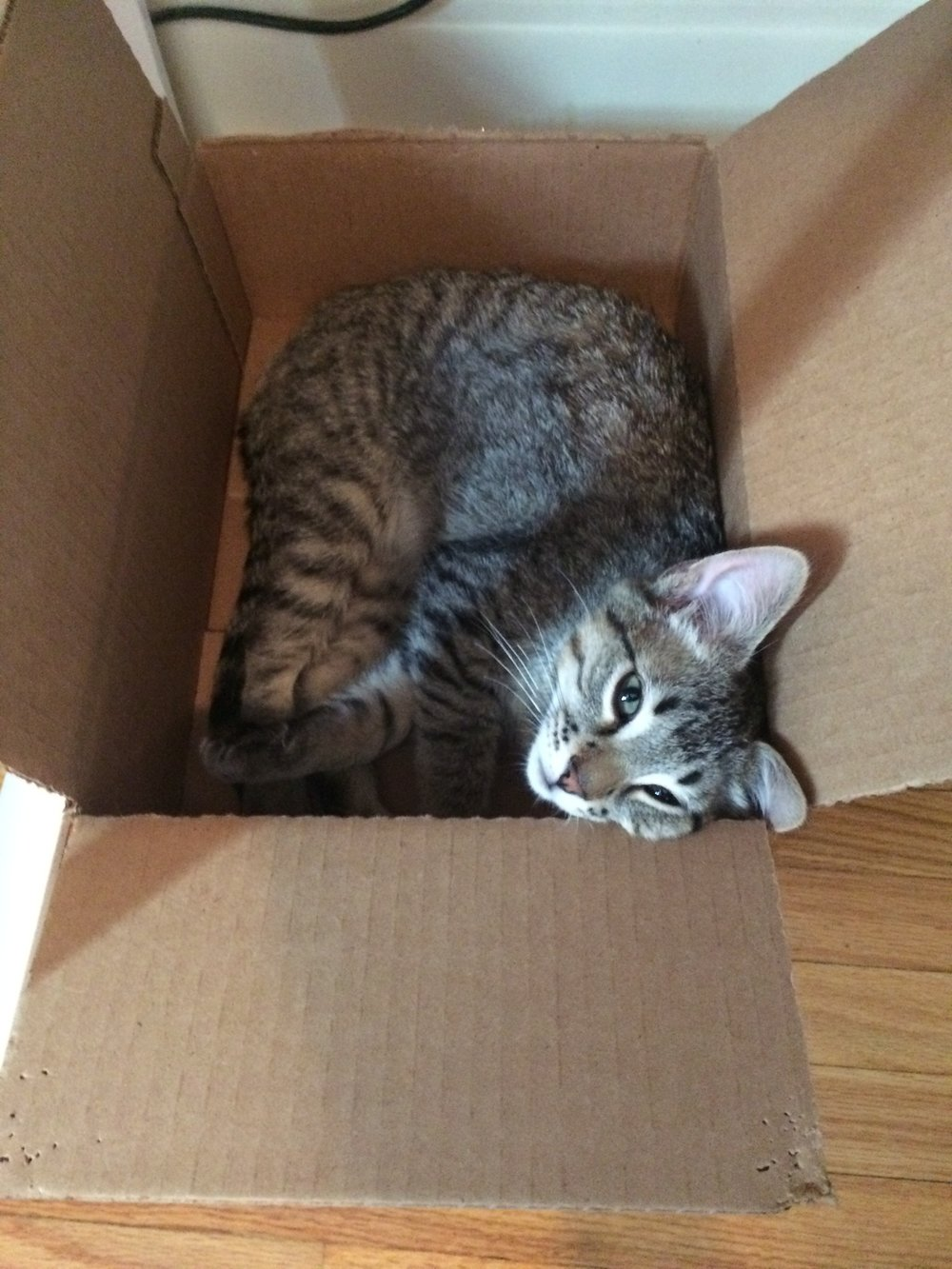 Gus in a box!