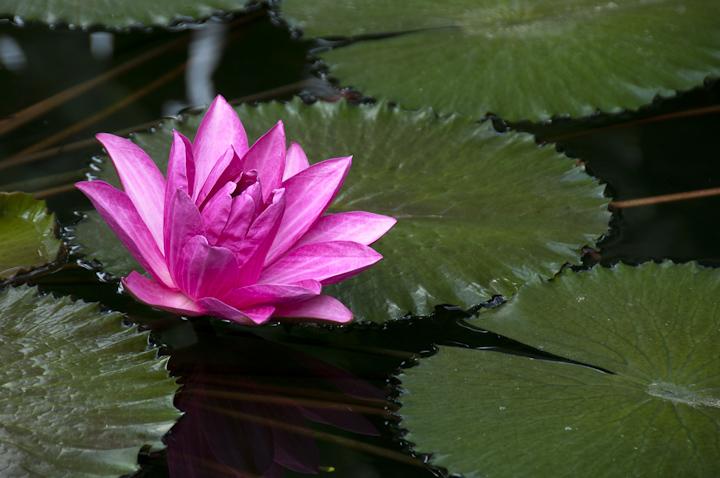Kew_Gardens_SML_020812_002.jpg