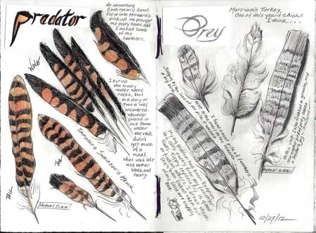 10/27/12 Predator and Prey feathers