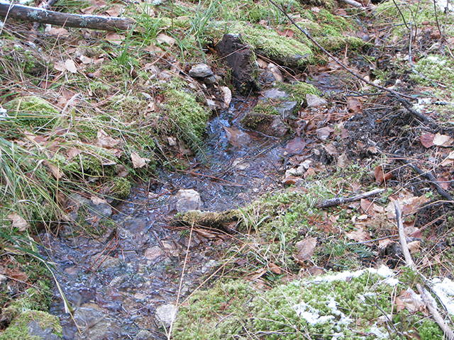 Running water in this draw - an unusual sight in November. A little snow is left on the moss.