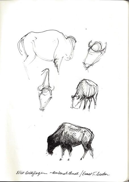 sketch03_13_13_buffalo01.jpg