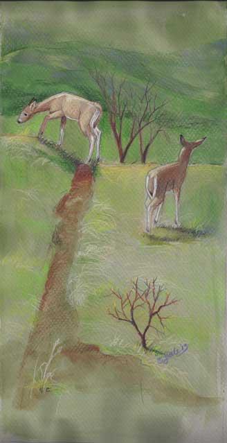 Deer, Spring Hillside