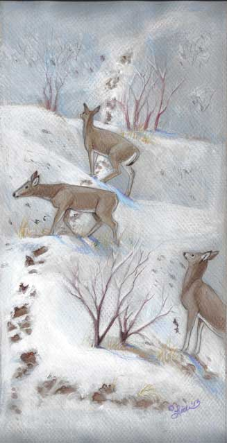 Deer, Spring Snow