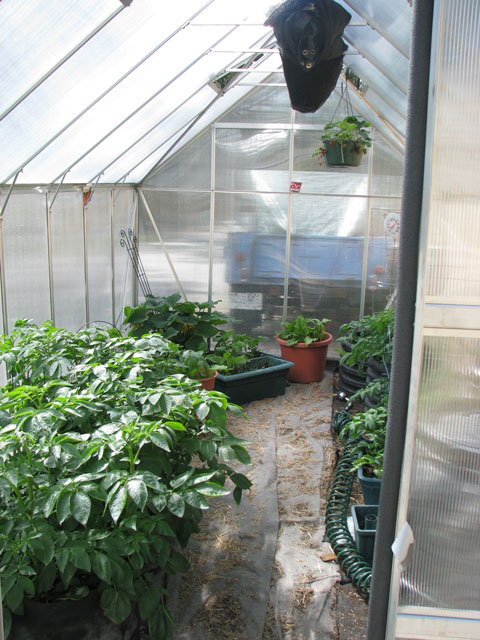 greenhouse_inside02.jpg
