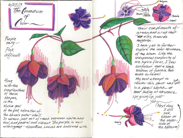 Another look at fuschia flowers -
