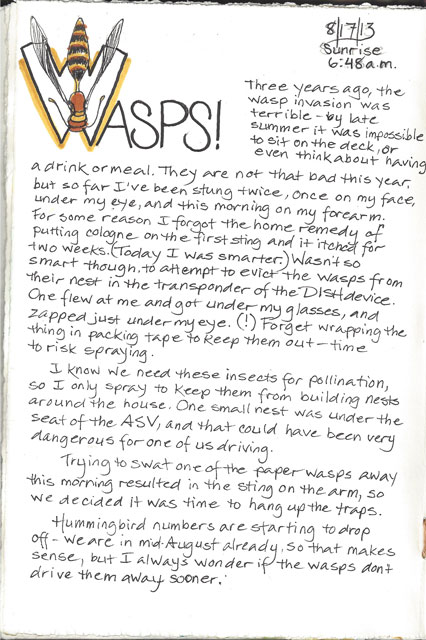 Wasp invasion starts -