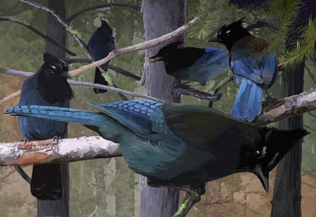 stellers_jays_in_the_trees_print.jpg