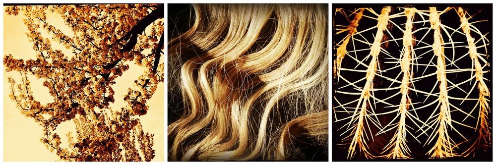 Amber Waves-Jennifer Bridges