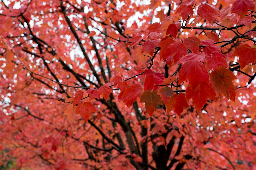 Fall_019.jpg