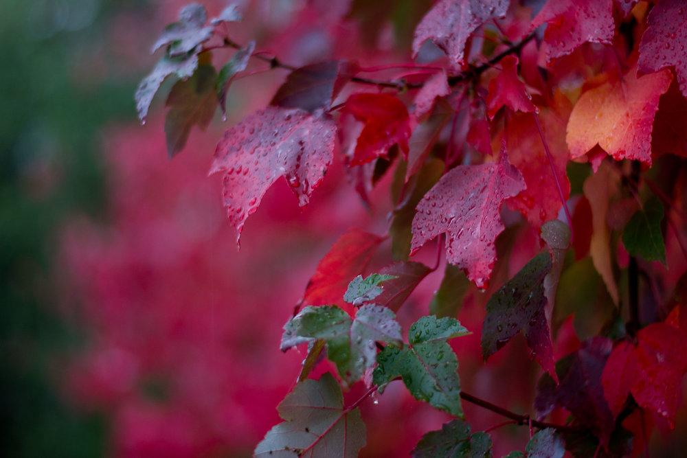 Fall_001.jpg