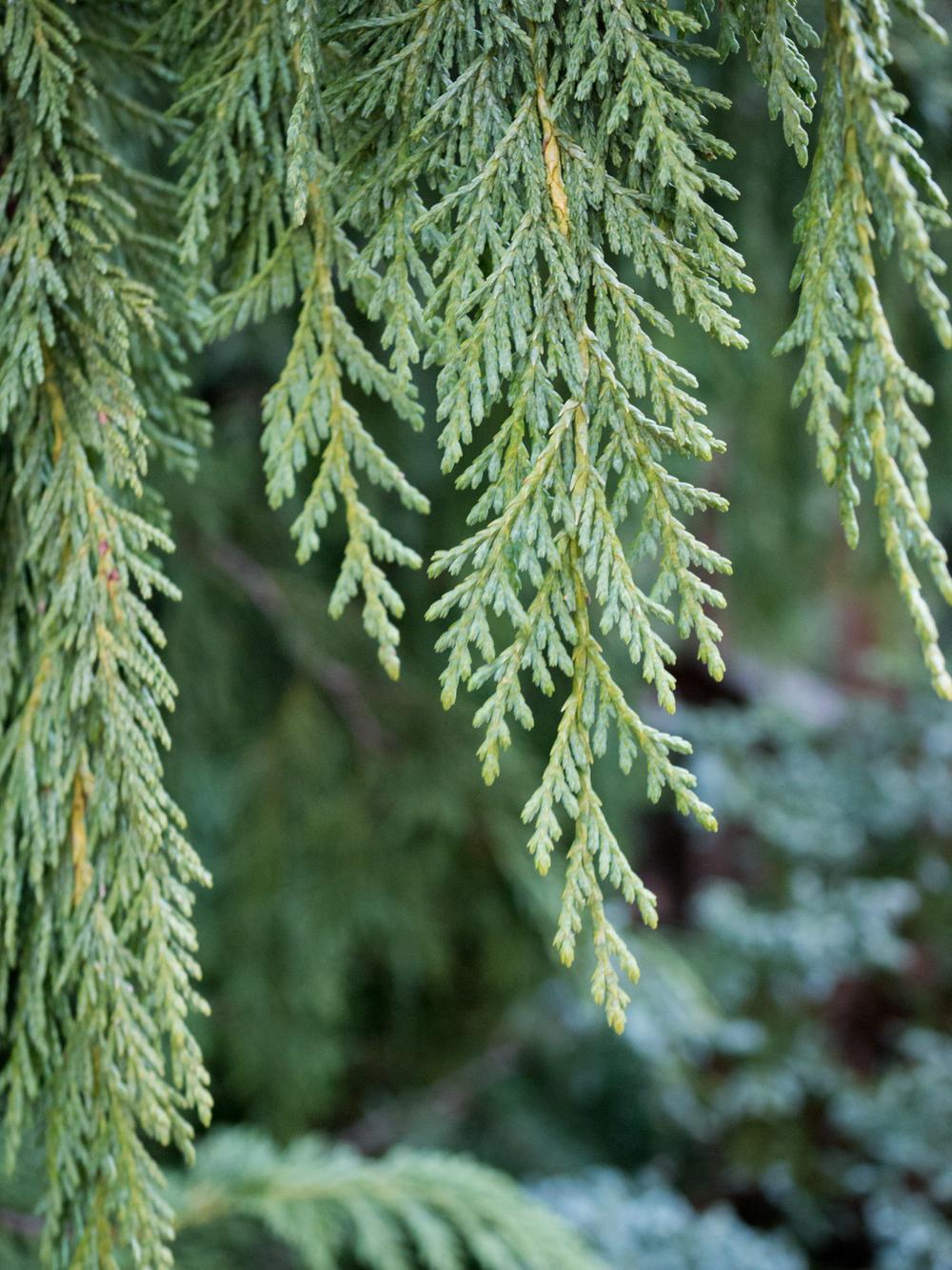 Hatcher Garden Web-1140070.jpg