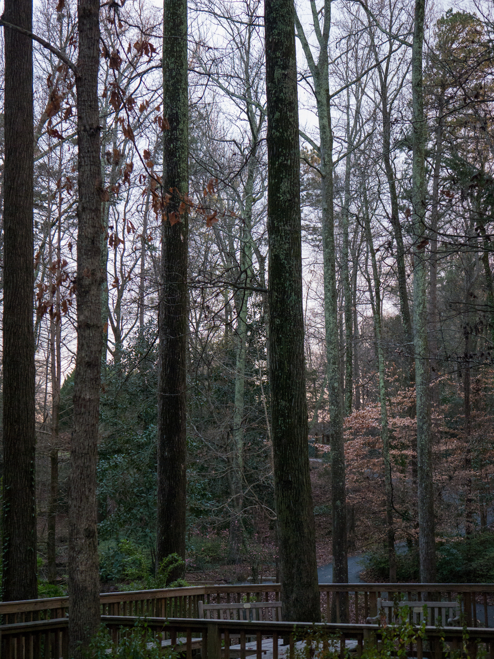 Hatcher Garden Web-1140022.jpg