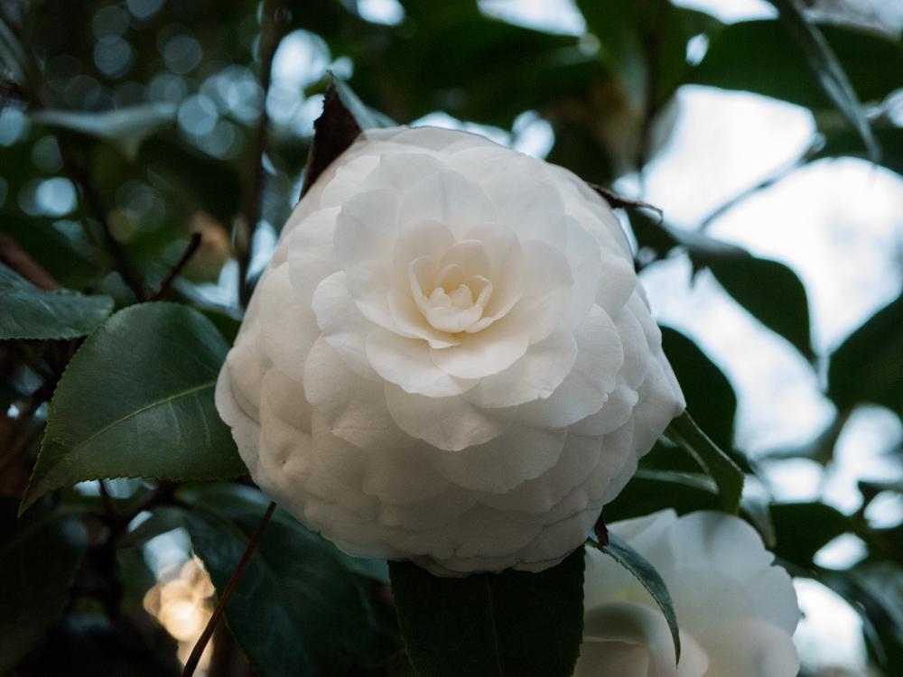 Hatcher Garden Web-1130995.jpg