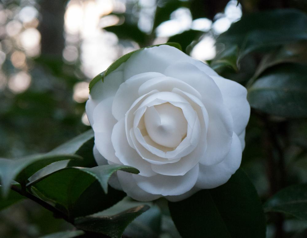 Hatcher Garden Web-1130952.jpg