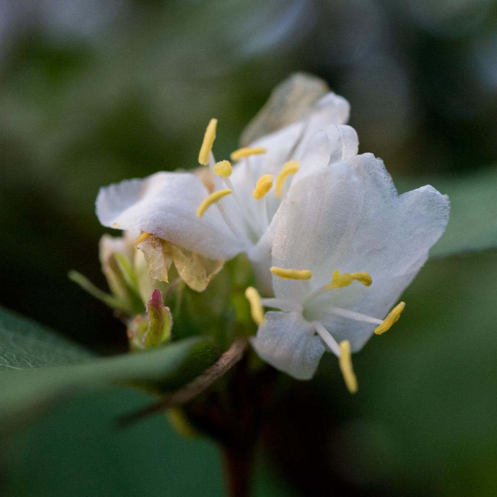 Hatcher Garden Web-1130929.jpg