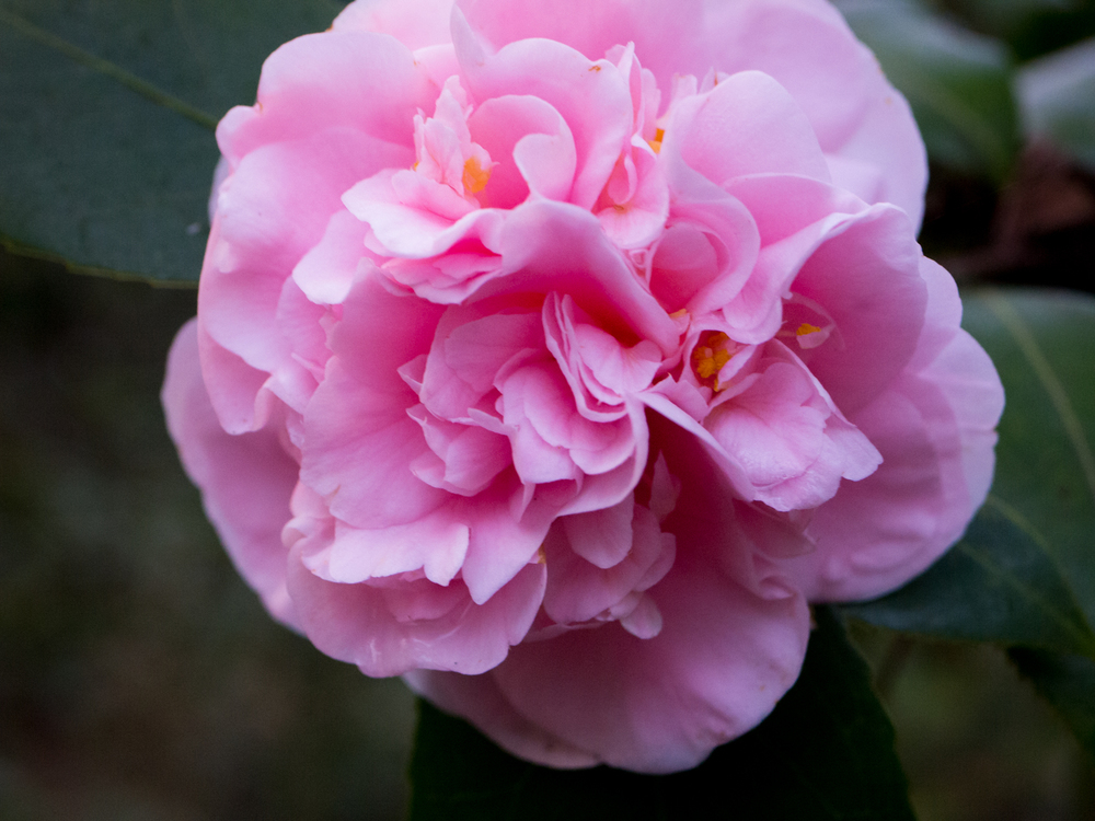 Hatcher Garden Web-1130918.jpg