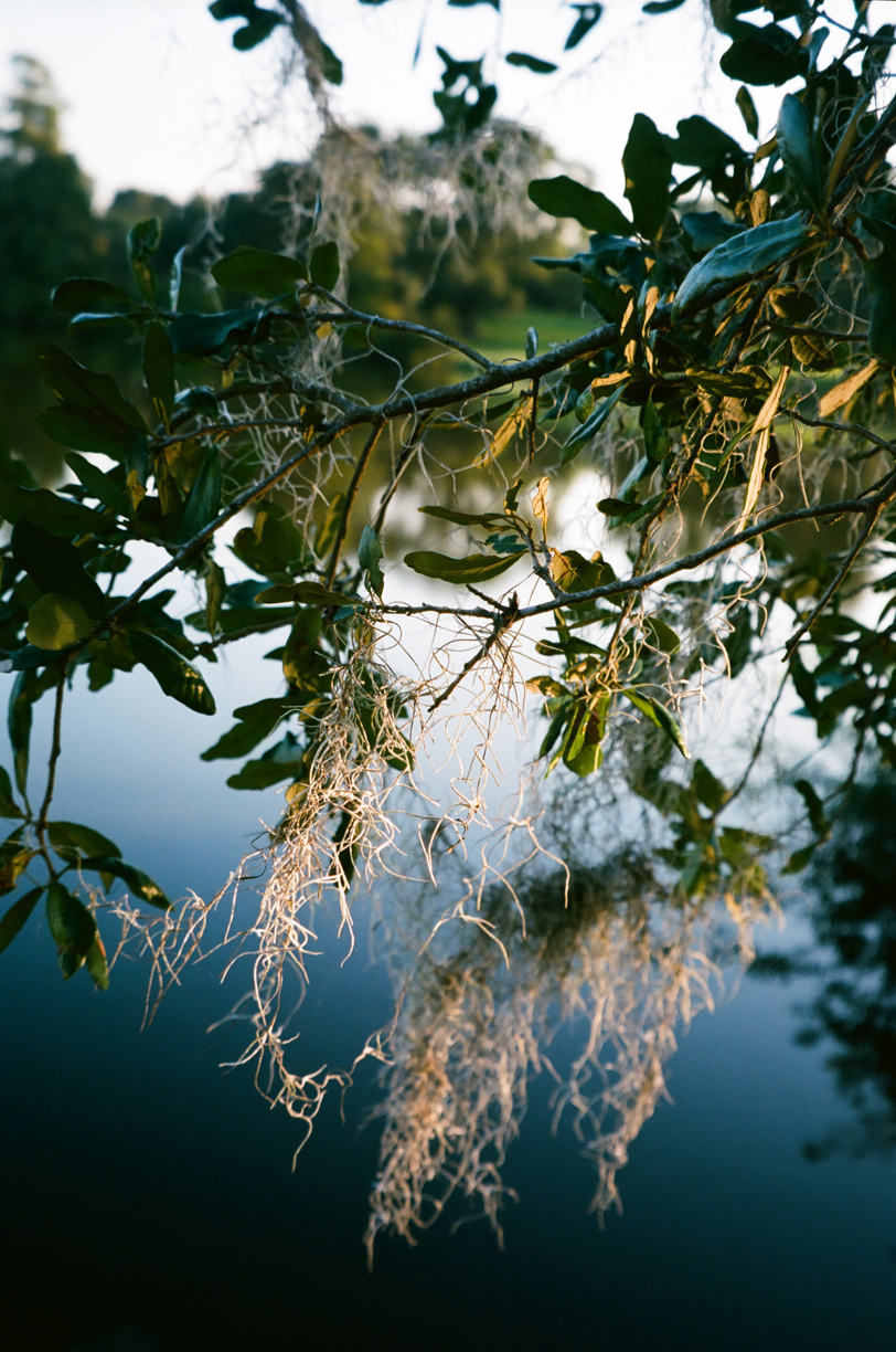 Spanish Moss Drapped on Tree Branch_Pond_web.jpg