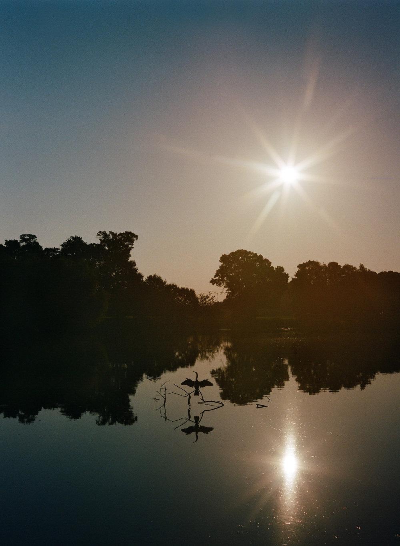 Crane Silhouette on Pond with Sun.jpg