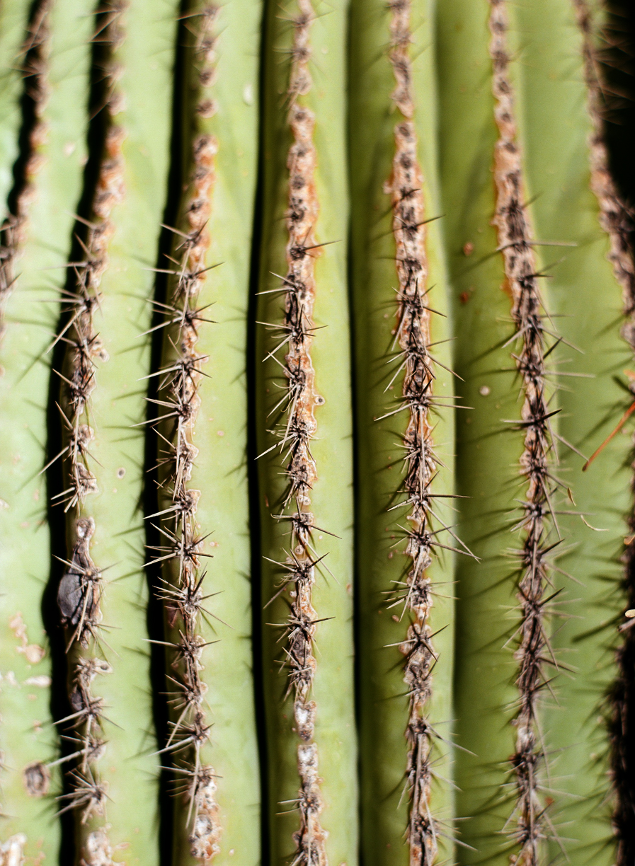 Prickly Thorns Close Up on Cactus_web.jpg