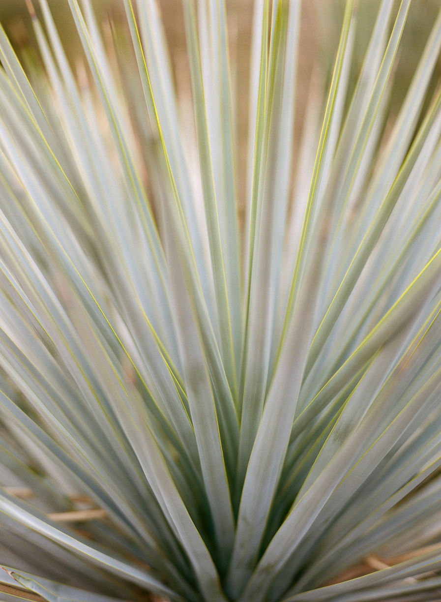 Close Up of Succulent Leaves_web.jpg