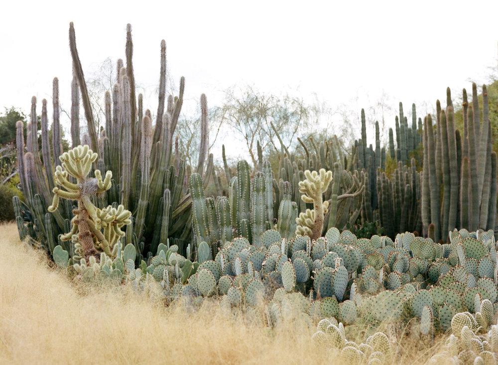 Cacti at Desert Botanical Garden_web.jpg