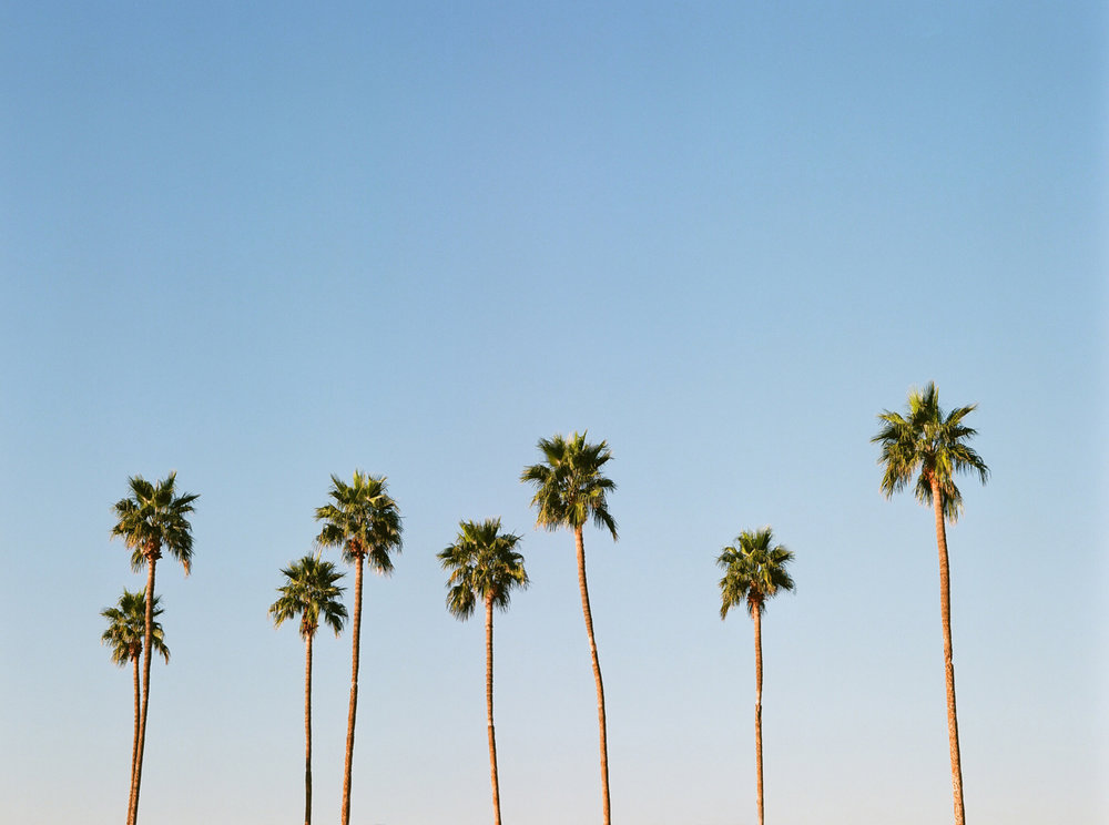 Row of Palm Trees in Phoenix_web.jpg