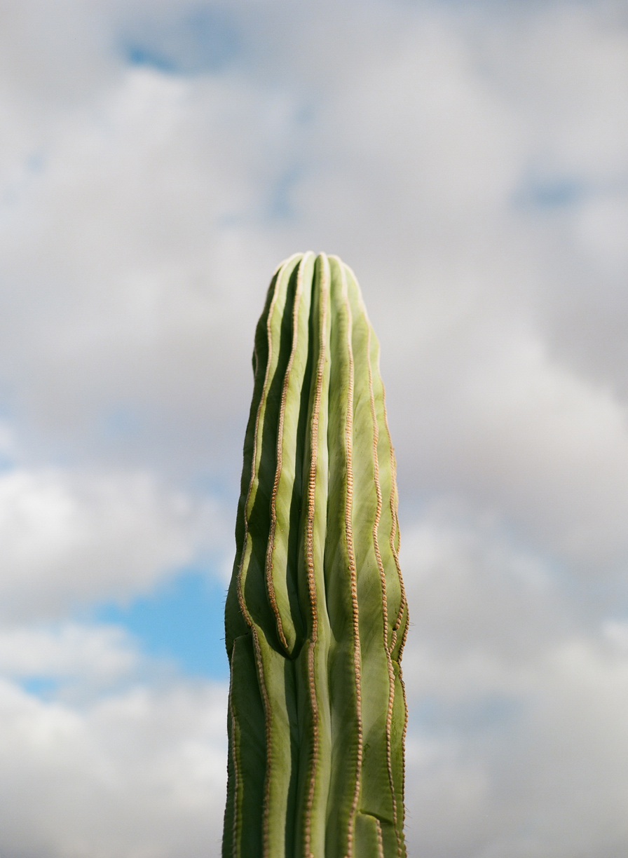 Tall Head of Cactus and Blue Sky and Clouds_web.jpg