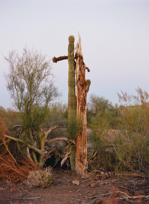 Dead Cactus at Dusk_web.jpg