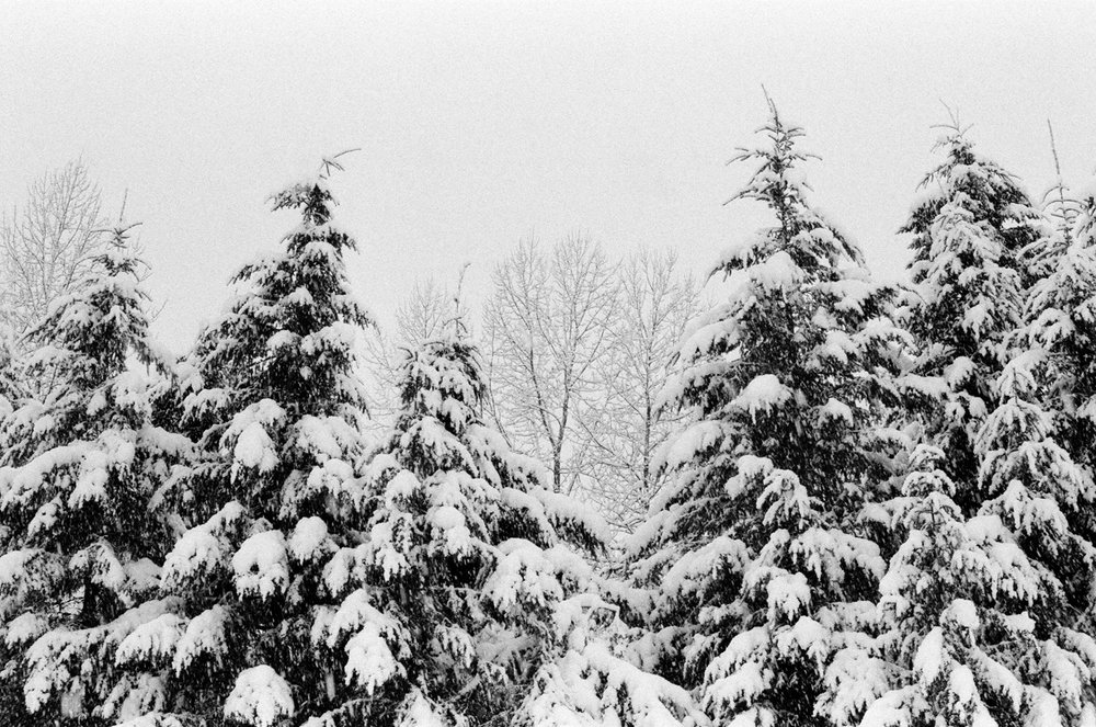 Snow Covered Trees_Snowshoeing at Gold Creek Pond 001_web.jpg