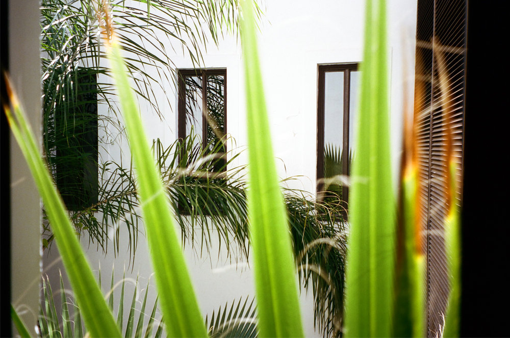 3 Windows and Palms Outside of Bathroom at Riad_Marrakech_web.jpg