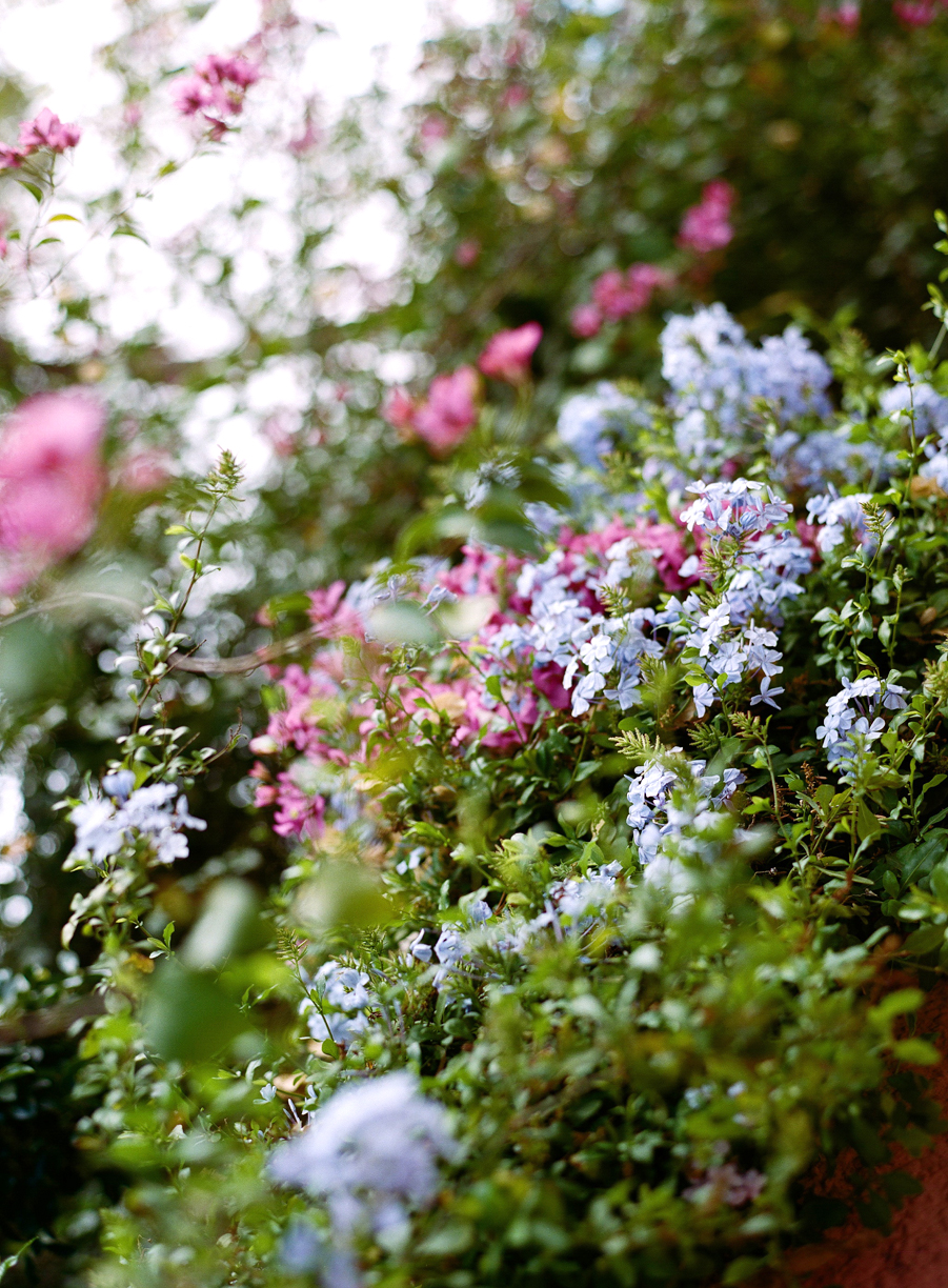 Light Blue and Pink Bougainvilleas Near the Square_web.jpg